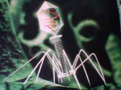 バクテリオ ファージ